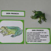 Lebenszyklus eines Frosches
