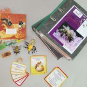 Themenkiste S - Die Biene