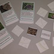 Regenwurm-Kartenlegespiel