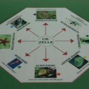 Klassifikationsspiel zum Tierreich