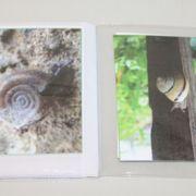 Schnecke - Fotoalbum