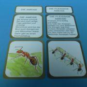 Lebenszyklus einer Ameise